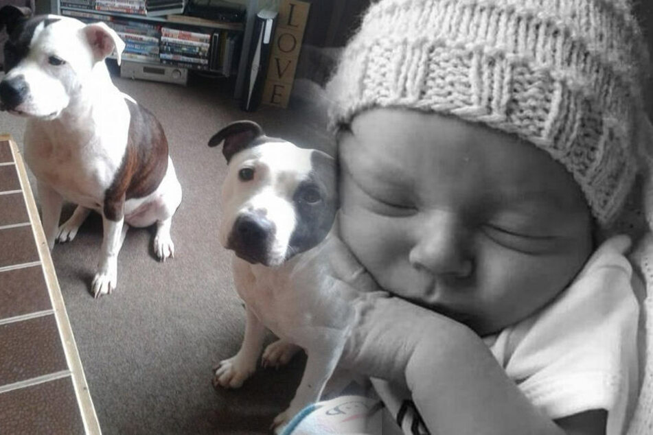 Baby stirbt, nachdem es von den Hunden seiner Eltern angegriffen wurde