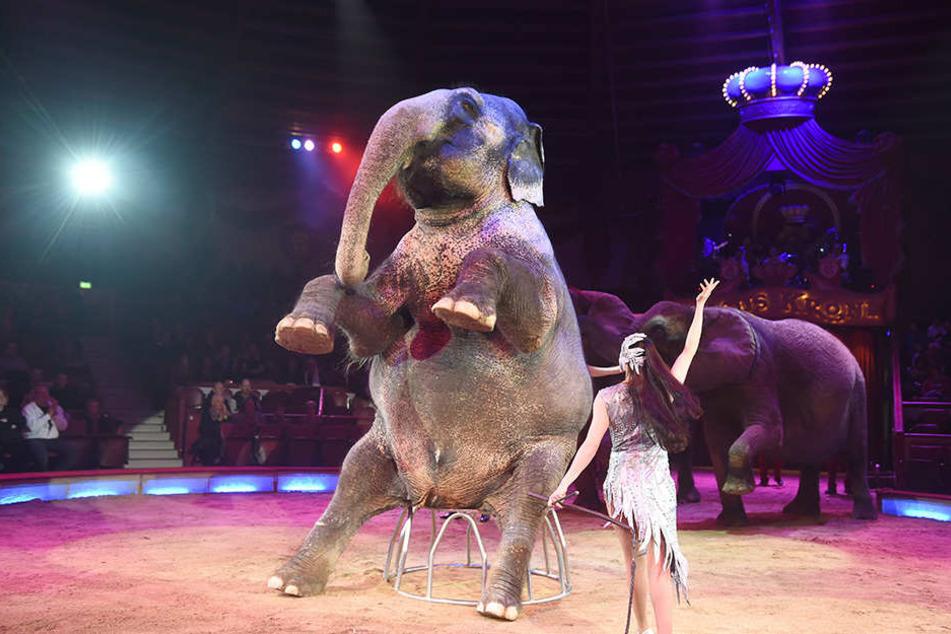 Das Tier fiel in den Zuschauerbereich vom Circus Krone, nachdem ihn ein anderer Elefant geschubst hatte. (Symbolbild)