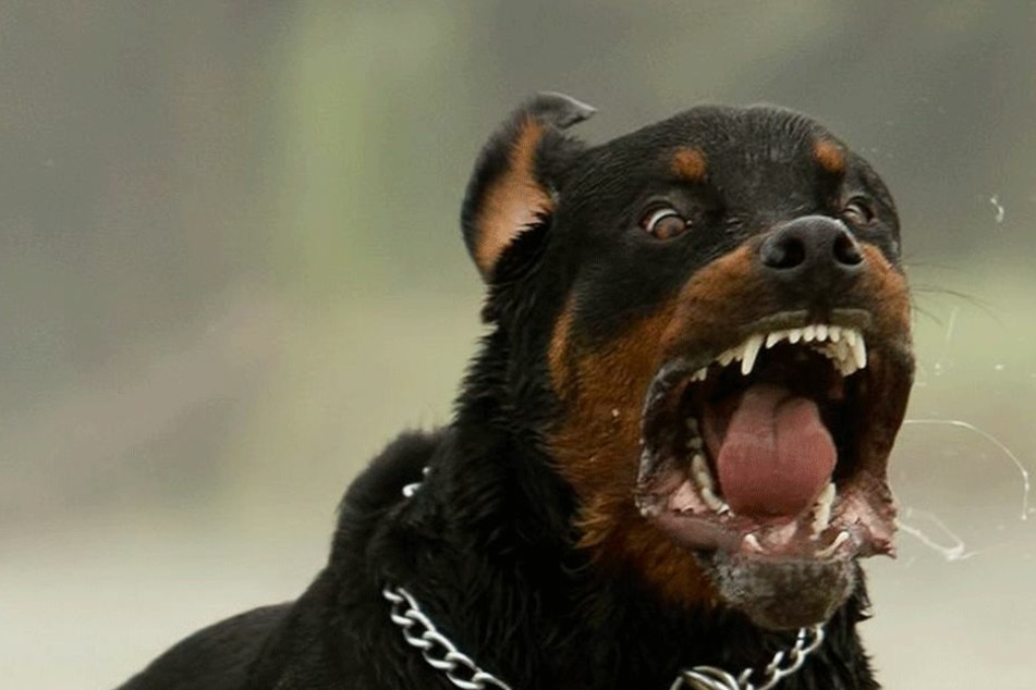 Betrunkene Hundehalterin: 17 Monate altes Kind stirbt in Wien nach Rottweiler-Attacke