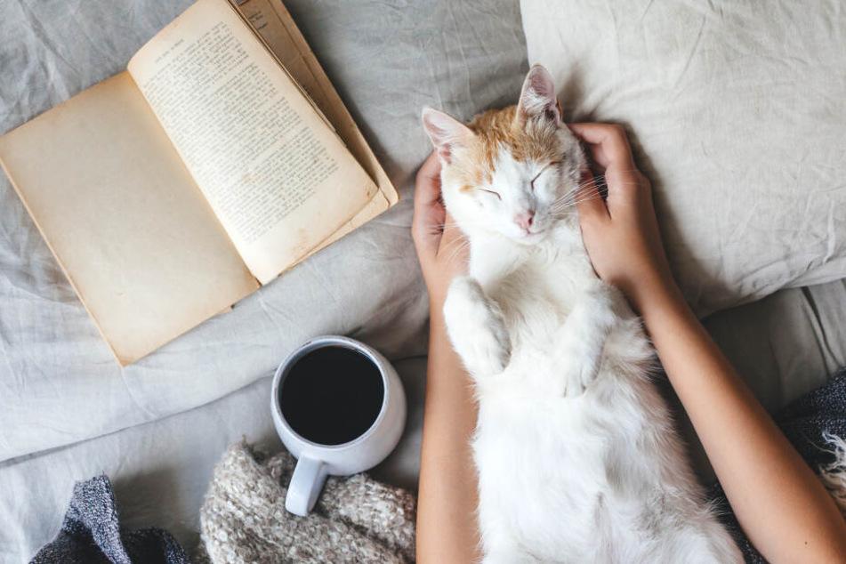 Diese Position spricht Bände: Die Katze fühlt sich wohl und zeigt ihren Bauch!
