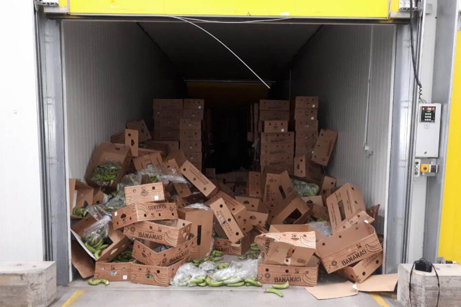 In einer aufgebrochene Reifehalle für Bananen liegen zahlreiche Kisten mit noch grünen Banenen. In den Kisten war rund eine halbe Tonne Kokain versteckt.