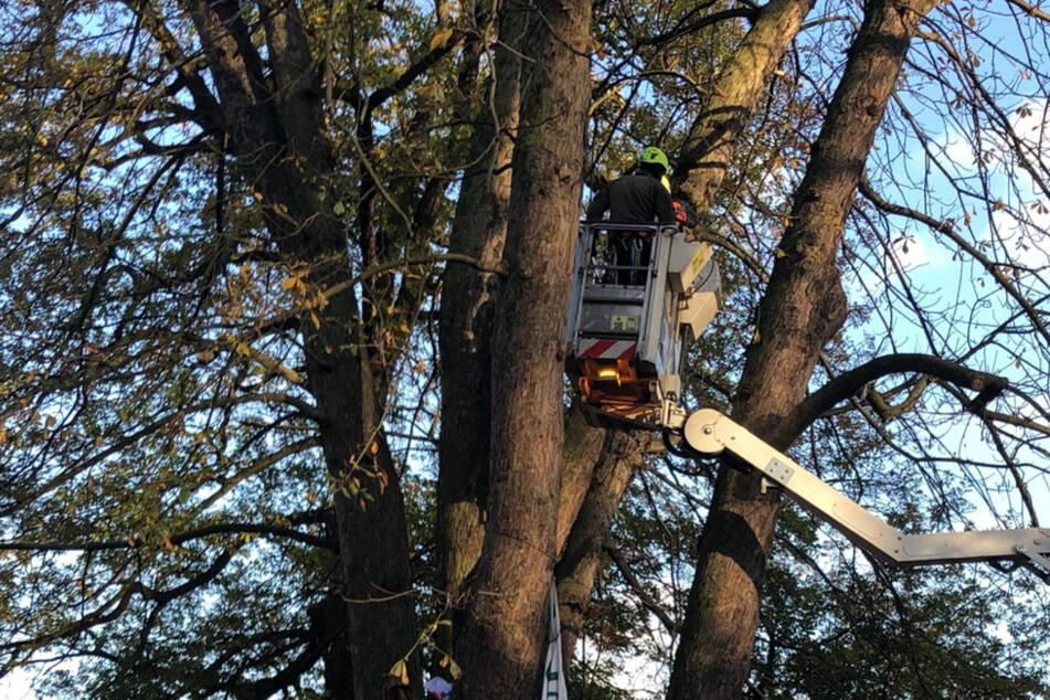 Mit einer Hebebühne holte die Polizei den letzten Aktivisten aus dem Baum.