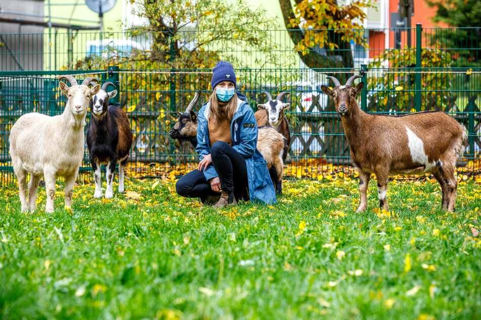 Die Ziegen haben im Tiergehege ihren eigenen Stall und sind beliebt bei den Patienten.