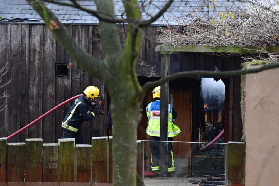 Großalarm im Zoo: Feuer verletzt acht Mitarbeiter