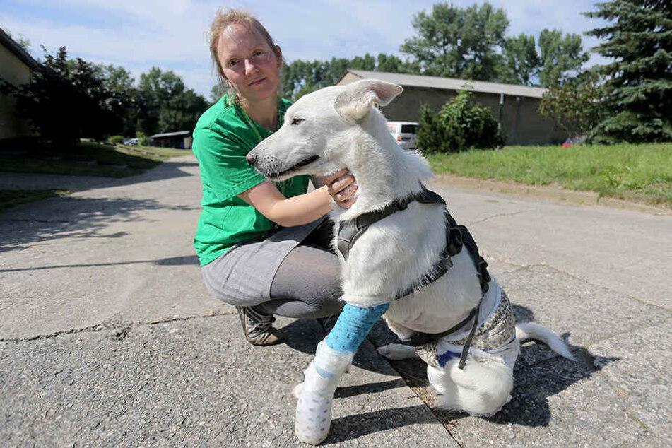 Tierhelferin Anne Schilling (30) mit dem schwer verletzten Schäferhund Janosh (1).