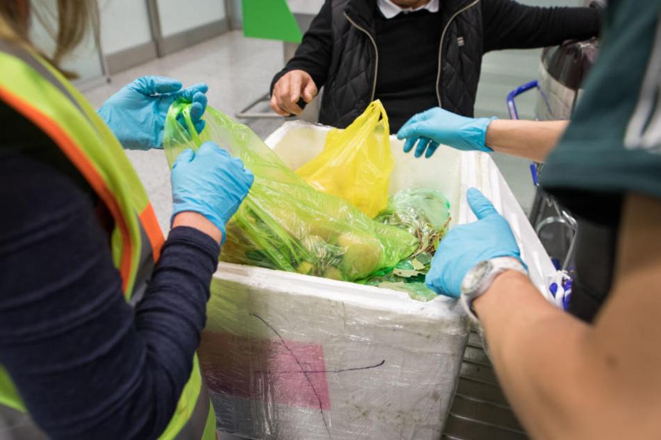 Satte 5337 Kilogramm wurden im Passagiergepäck gefunden.