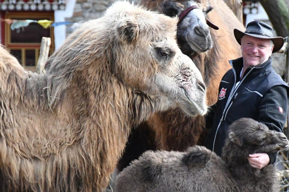 Dresden: Wo bleibt die Unterstützung? Sachsens Zoo-Chefs fühlen sich alleingelassen