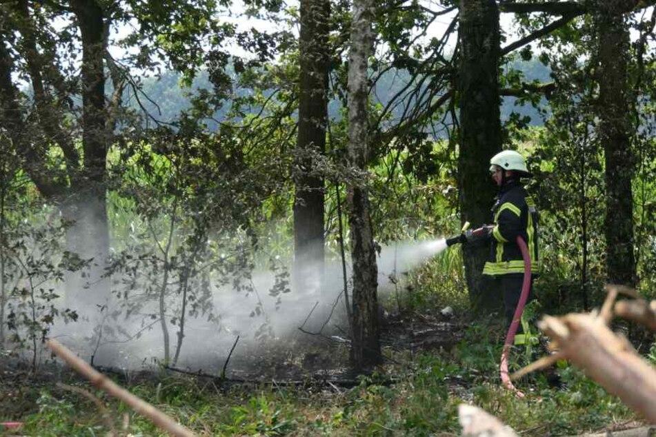 Bereits mehrere Bäume erwischt: Radfahrerin entdeckt Waldbrand bei Leipzig