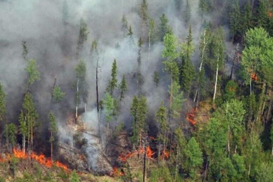 Hektar gelöscht: Erste Erfolge im Kampf gegen Waldbrände in Sibirien
