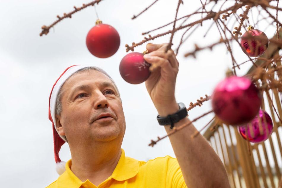 Jürgen Hoffmann (59) schmückt einen verdorrten Weihnachtsbaum.