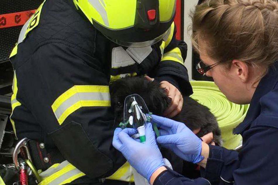 Feuerwehrleute und eine Rettungssanitäterin versorgten den Hund mit Sauerstoff.