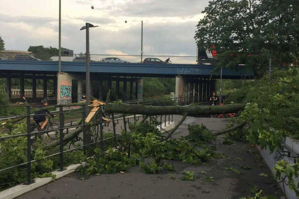 In Berlin krachten Bäume auf die Gleise der S-Bahnen, weshalb der Verkehr unregelmäßig läuft.