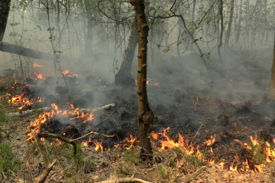 Der Brand breitete sich schnell im Unterholz aus.