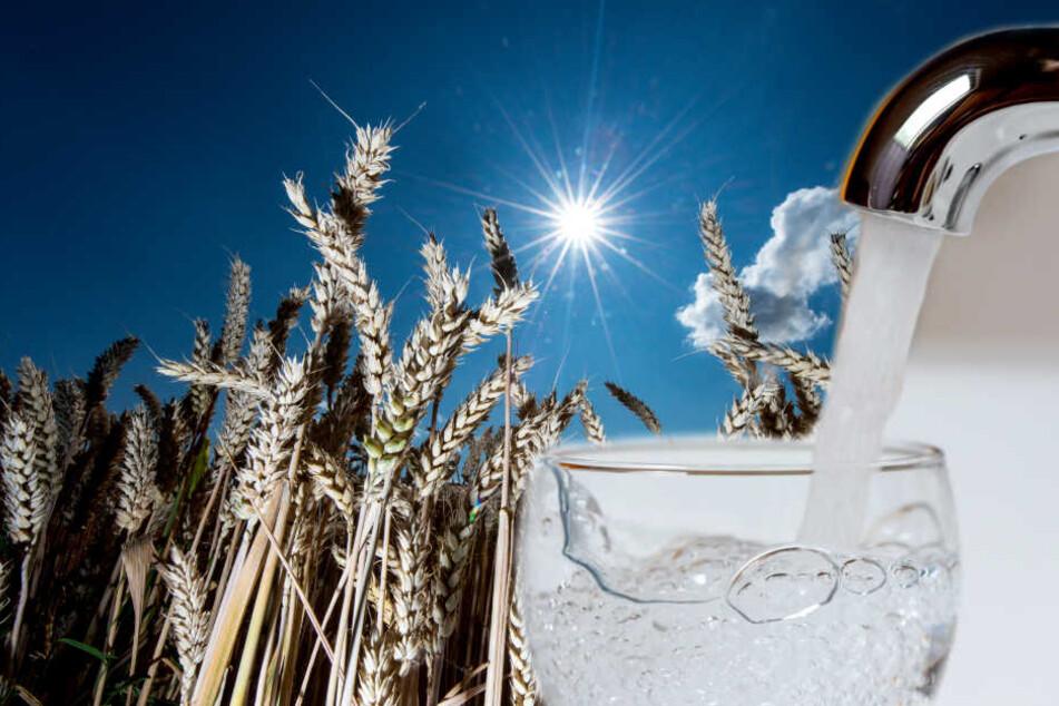 Nach wochenlanger Dürre: Hier wird jetzt das Trinkwasser knapp!