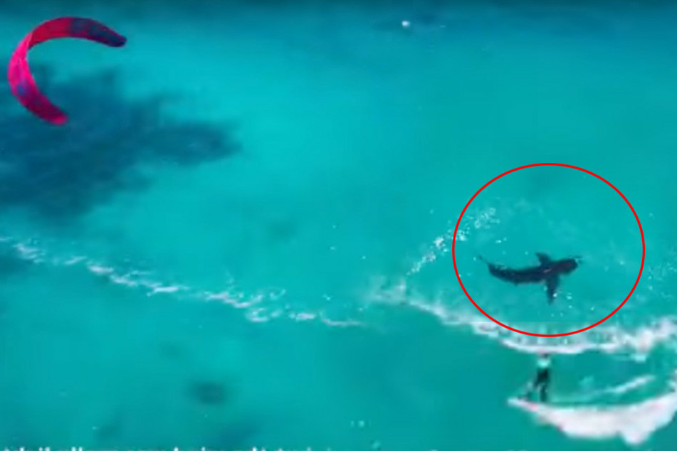 Ahnunglose Frau surft direkt neben riesigem weißen Hai