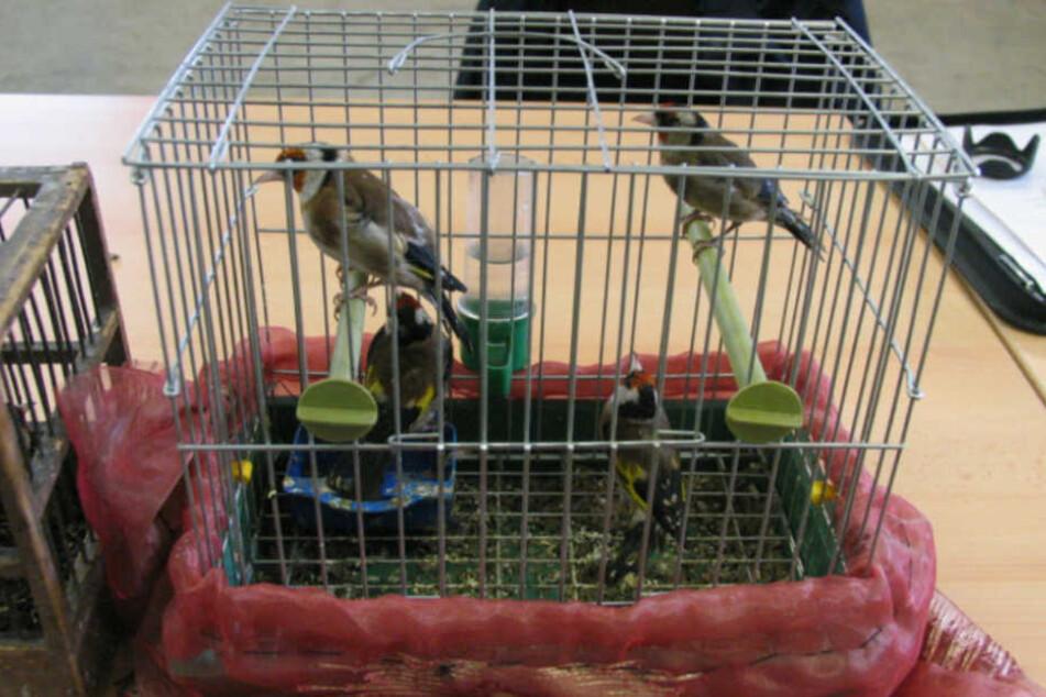 Die Käfige waren viel zu klein für die wild lebenden Singvögel.