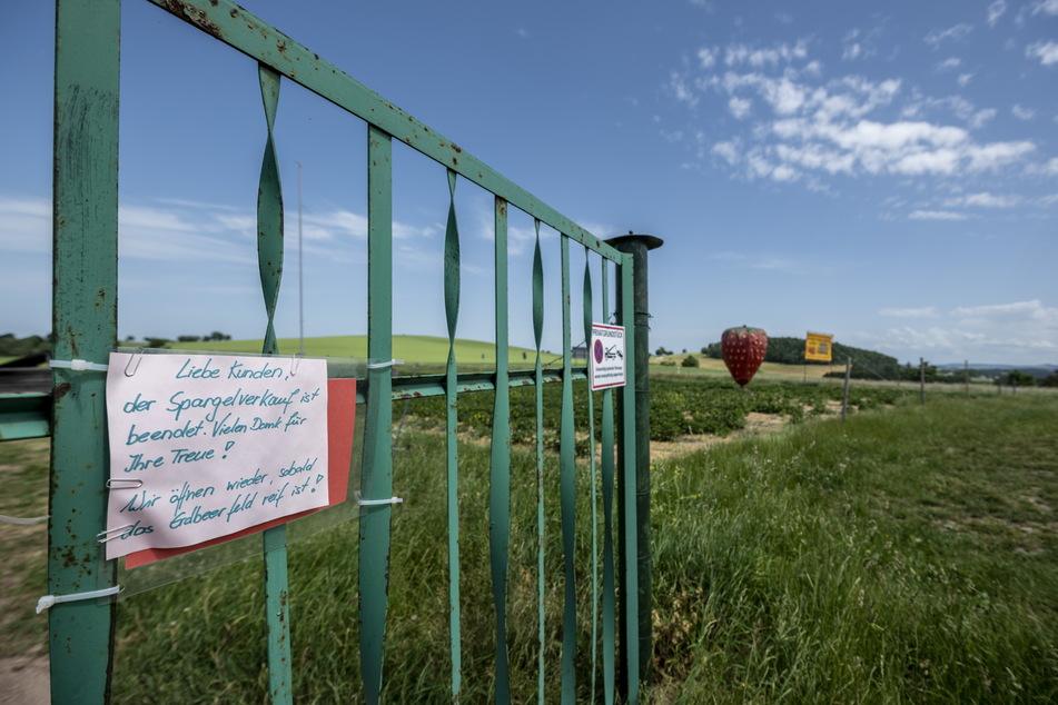 Hier gibt's noch keine Erdbeeren: Das Feld in Klaffenbach hat noch geschlossen.