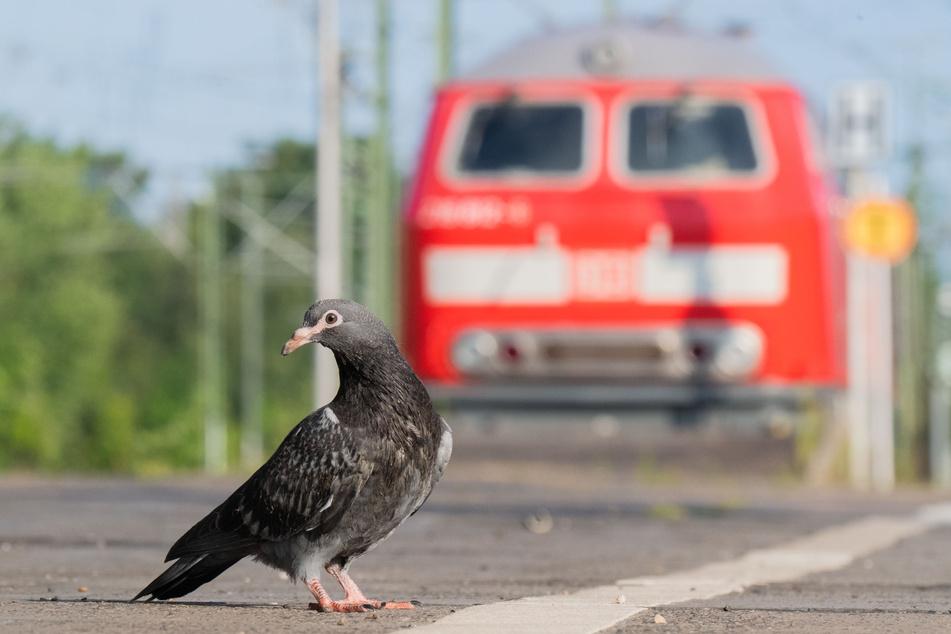 Viele Gleise in NRW waren an diesem Donnerstag aufgrund des Streiks bei der Deutschen Bahn menschenleer.