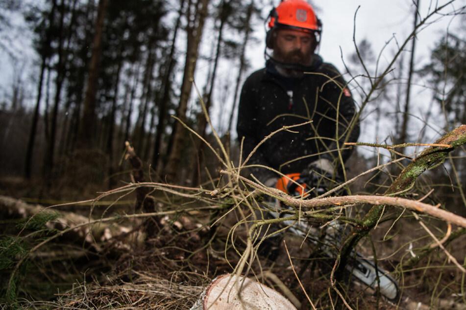 Nach Jahren der Probleme: Gute Nachrichten für Bayerns Wälder
