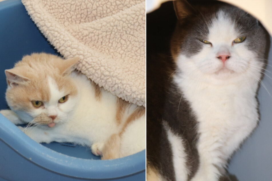 Katzen Maki und Clueso.