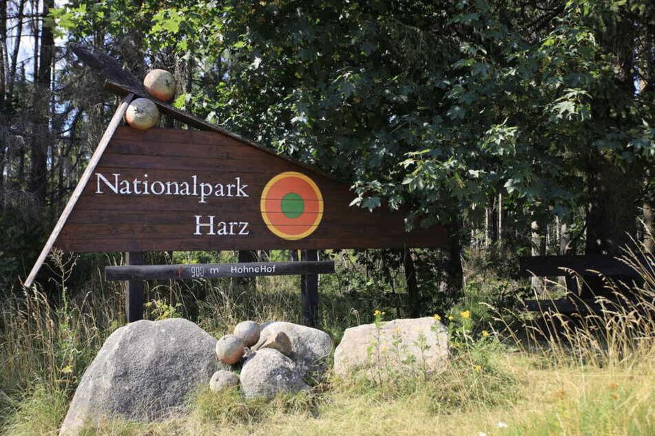 Im Nationalpark in Harz wurde während des Lockdowns an der Sanierung der Wege gearbeitet.