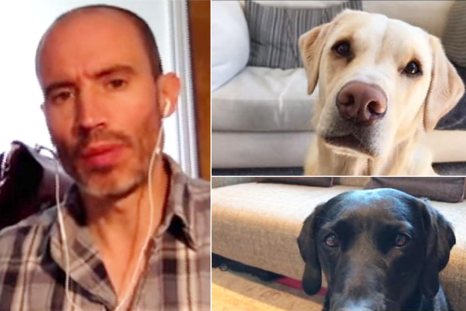 Niedlicher Clip geht viral: Sportmoderator veranstaltet Video-Chat mit seinen Hunden