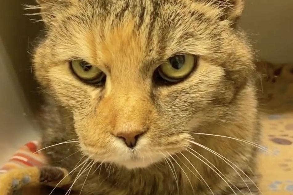 Der Neuzugang ist nicht die einzige alte Katze im Tierheim. Auch Luzi wurde mit 16 Jahren vor ein paar Wochen ins Tierheim gegeben.
