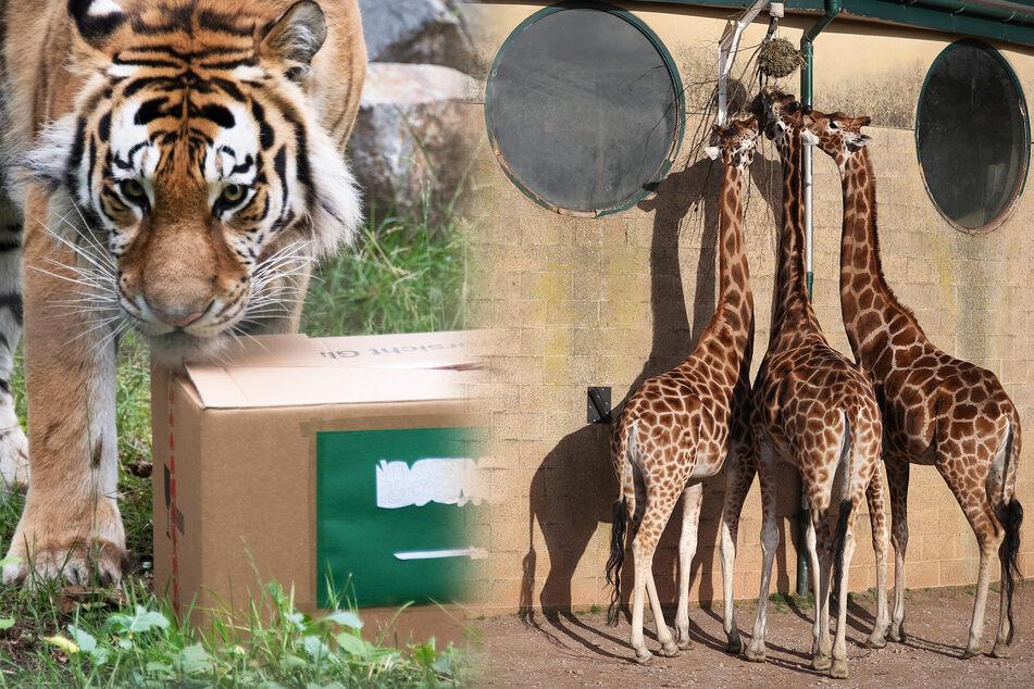 Zoo-Tieren fehlt Kontakt zu Menschen: So überstehen sie die Isolation