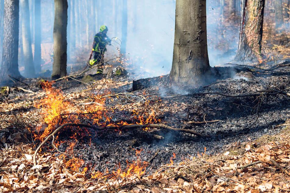 In ganz Sachsen besteht derzeit erhöhte Waldbrandgefahr. Erst am Freitag musste in Radebeul die Feuerwehr ausrücken, um in einem Waldstück zu löschen.