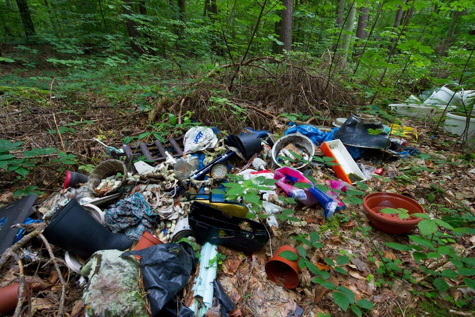 Illegal entsorgter Müll liegt in einem Wald.