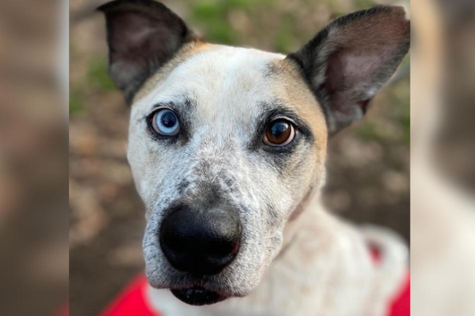 Hund Fritz ist mit außergewöhnlichen Augen zur Welt gekommen. Hinter dem unschuldigen Blick des Mischlings steckt jede Menge Temperament.