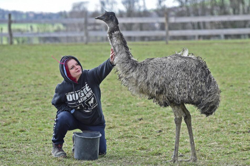 Farmerin Janine Golla (33) füttert ihren Emu und verteilt gleich noch ein paar Streicheleinheiten.