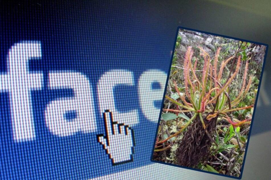 Sensation! Riesige fleischfressende Pflanze per Facebook entdeckt