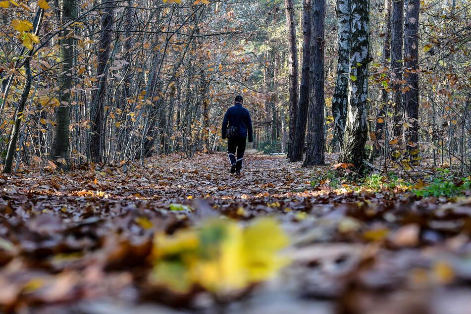 Schrecklicher Fund: Vermisste Birgit A. (†) nach fünf Jahren tot in Wald entdeckt