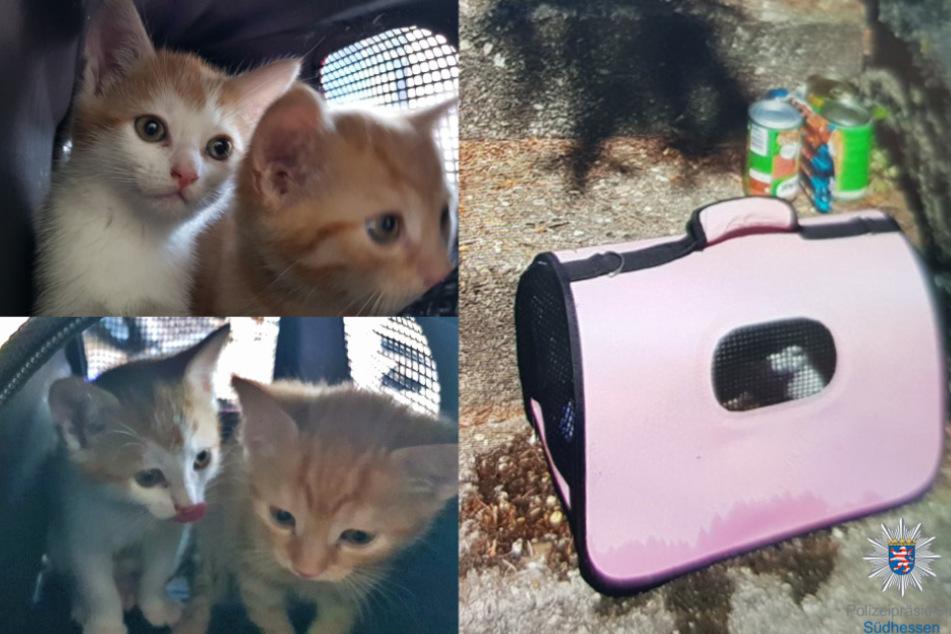 Süße Katzenbabys einfach ausgesetzt! Wer macht sowas?