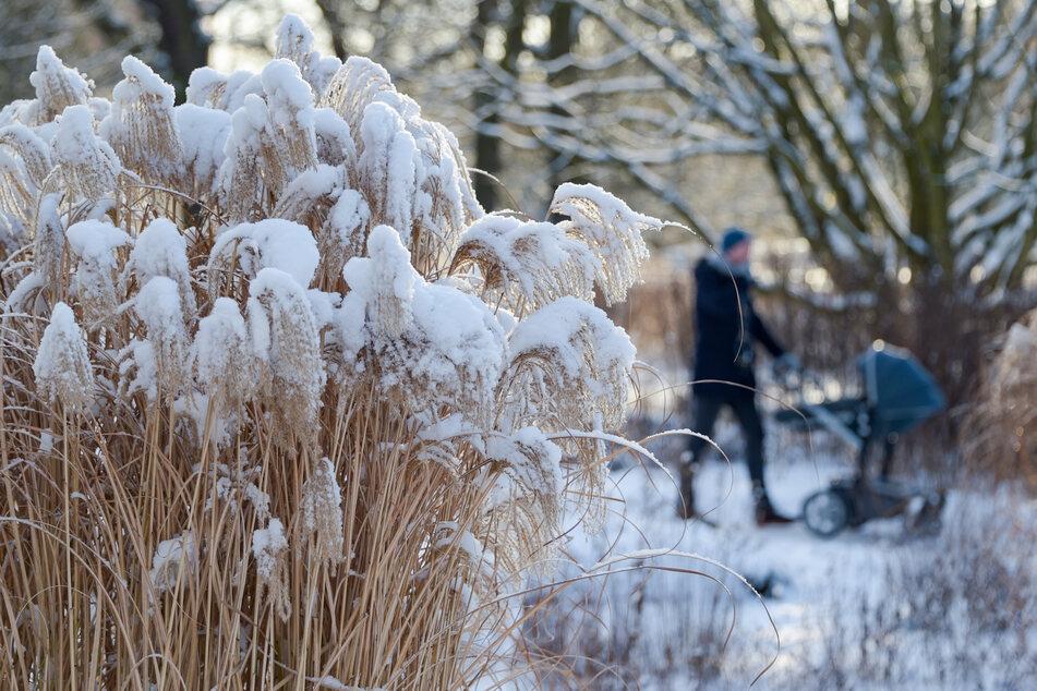 Weiße Weihnachten im Norden? Diese Statistik überrascht