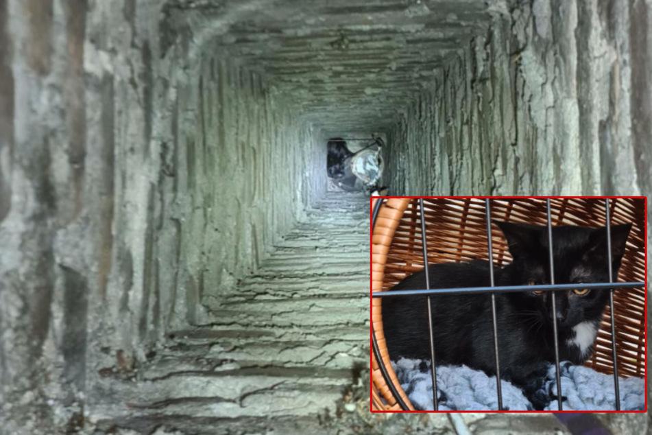 Köln: Kölner Feuerwehr rettet verirrte Babykatze