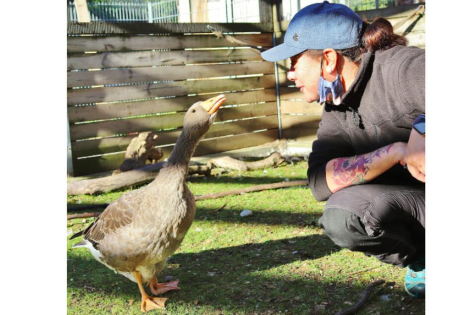 Gans Greta mit einer Pflegerin des Tierheims.