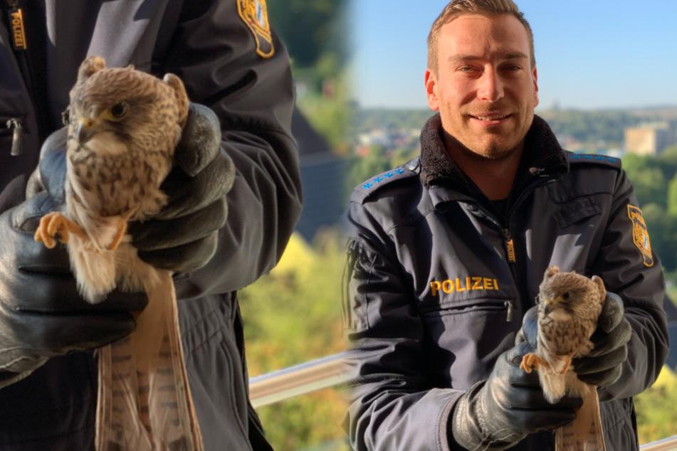 Hilfloses Falkenweibchen gerettet! Polizisten auf tierischer Mission
