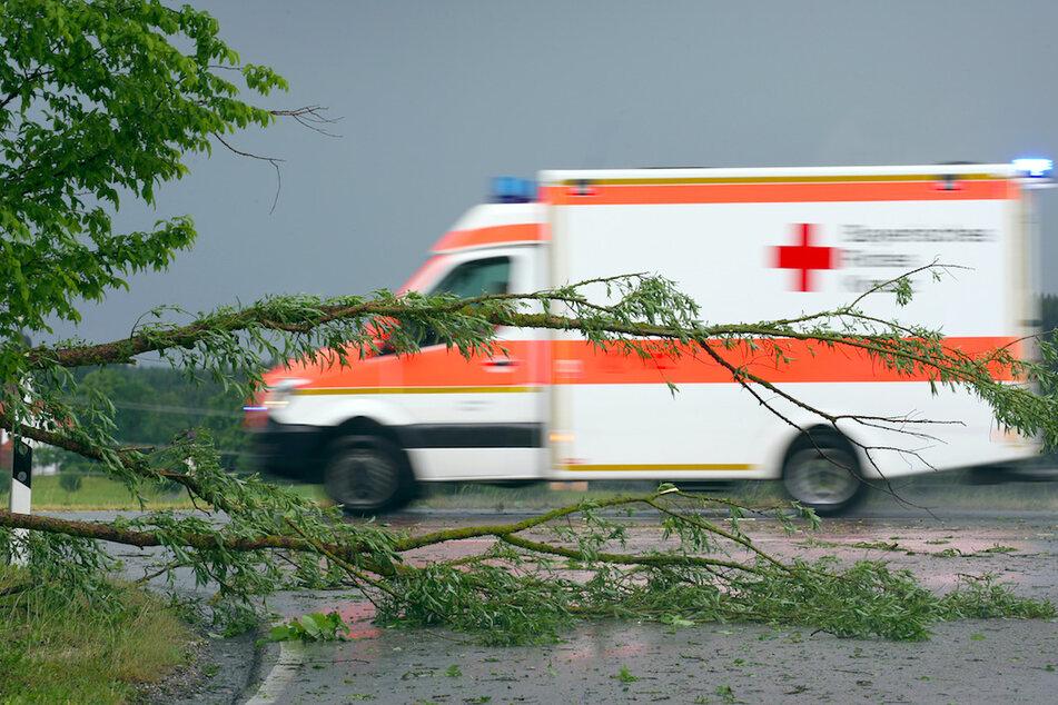 Auf einer Bundesstraße in Oberbayern wurde ein Autofahrer von einem Baum erschlagen. (Symbolbild)