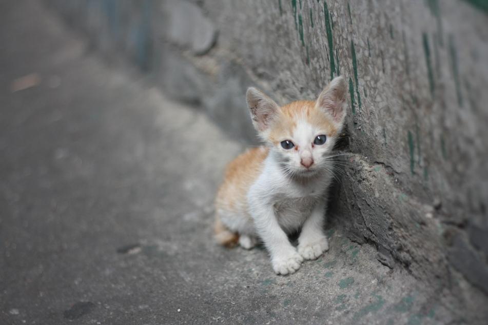 Streuner-Kätzchen haben oft Probleme damit, Menschen zu vertrauen. (Symbolbild)