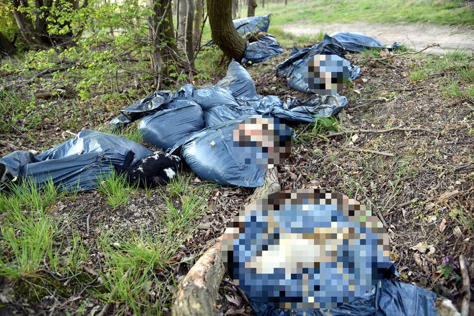 Große Schweinerei: Wie Müll wurden die toten Tiere am Waldweg entsorgt.