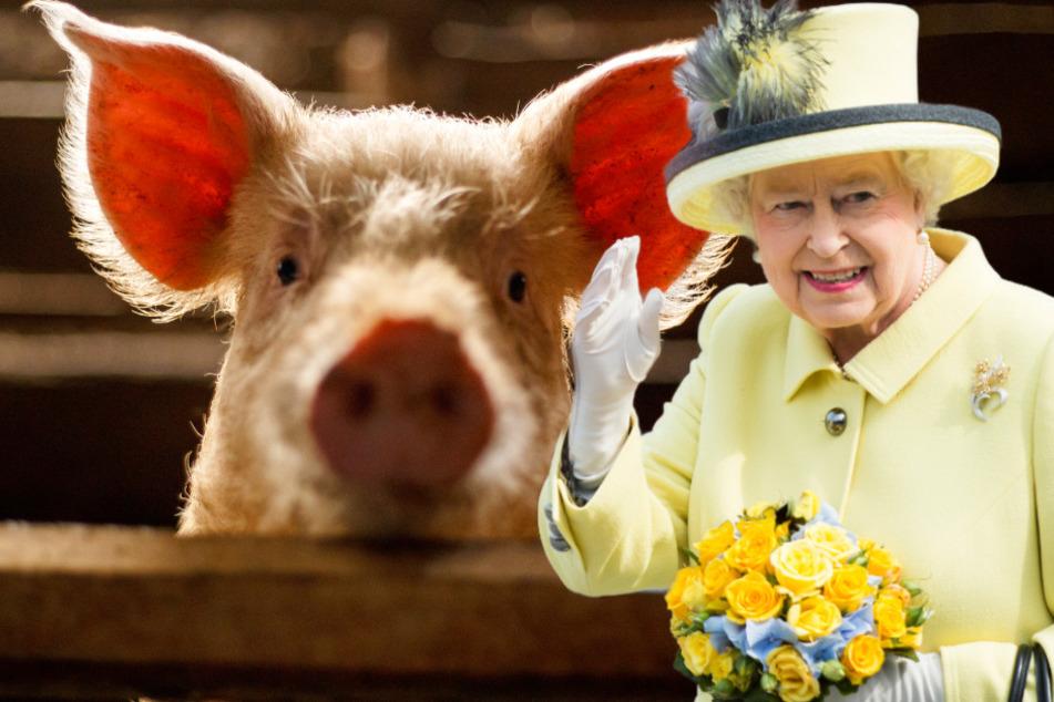 Briten als Vorreiter bei Tierrechten: Neues Gesetz zu Gefühlen von Wirbeltieren!