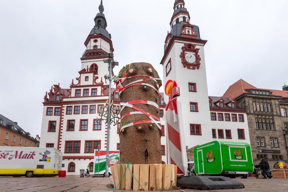 Nach Not-Fällung: Chemnitz sucht neuen Weihnachtsbaum