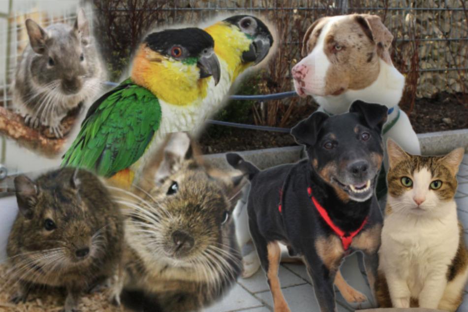 8 besondere Hunde, Katzen und mehr: Diese Haustiere suchen dringend ein Zuhause