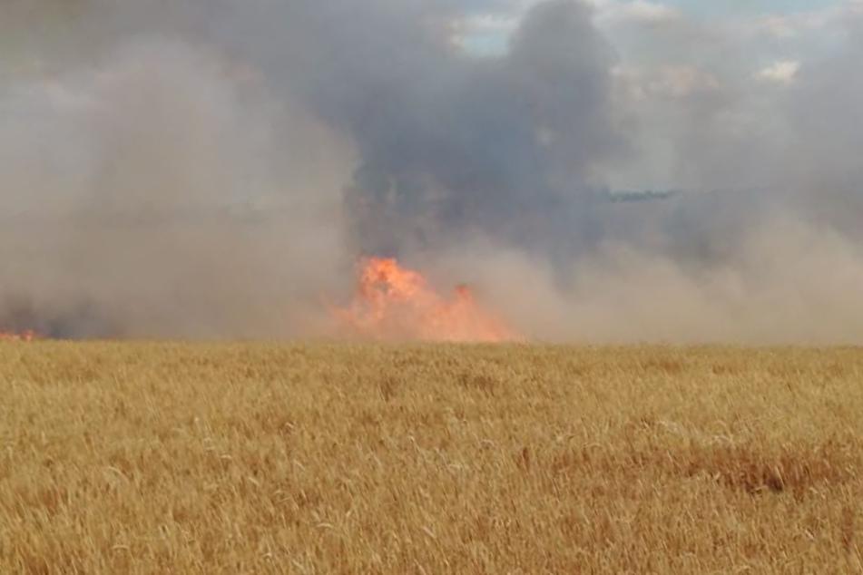 Auf einer Fläche von fünf Hektar brannte ein Feld.