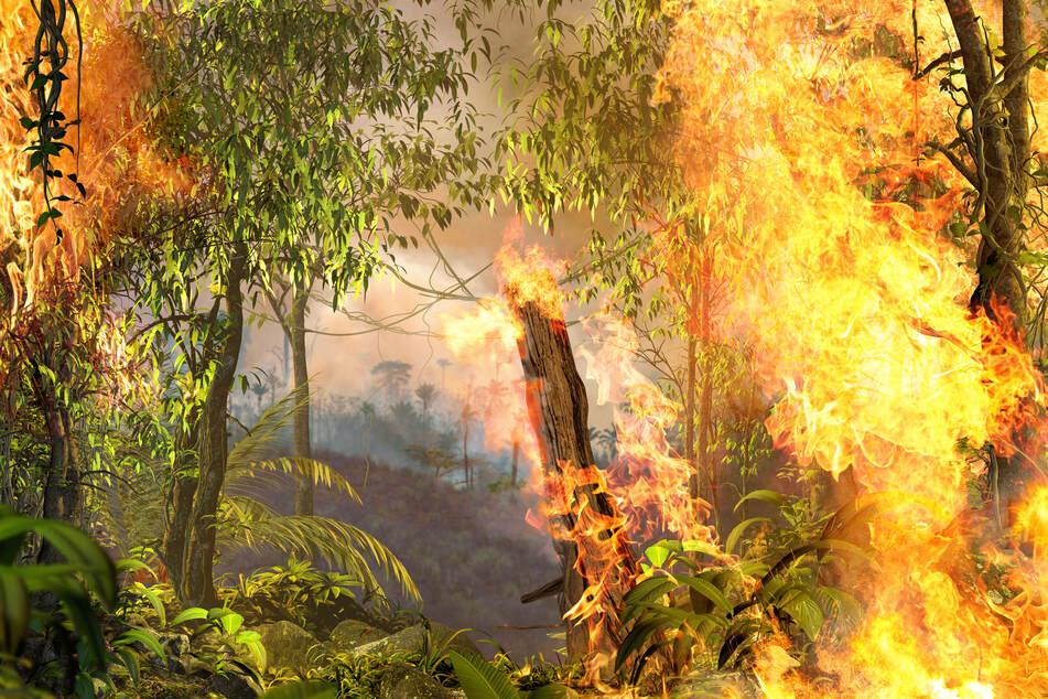 Rainforest burning (stock image).