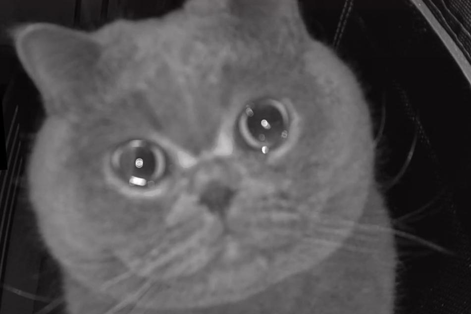 Fu Fu the cat has tears in his eyes.