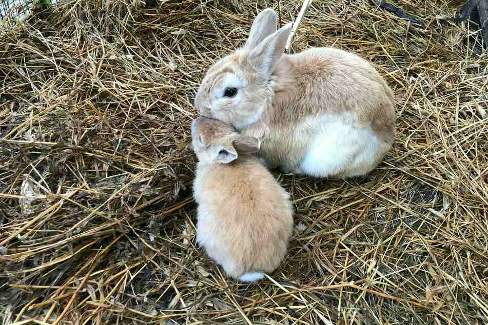 Katzenklos, Vogel- und Kaninchenkäfige & Co. sollten regelmäßig saubergemacht werden.