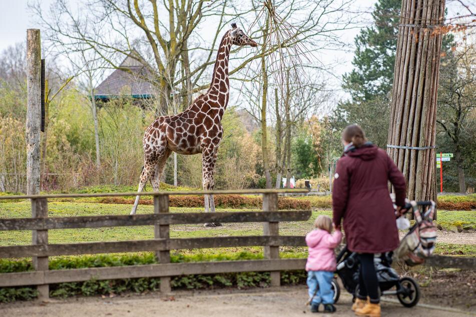 Nach vier Monaten ohne Besucher hat der Zoo Münster am Montag seine Türen in der Corona-Pandemie wieder geöffnet.